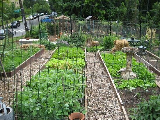 Glover Park community gardens | 550 x 413 · 152 kB · jpeg