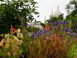 RiverSmart Homes Will (Eventually) Enhance My Garden