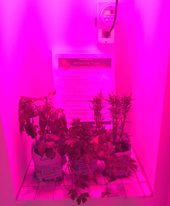 DC's Newest Condo Amenity: A Marijuana Grow Closet: Figure 1