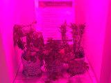 DC's Newest Condo Amenity: A Marijuana Grow Closet