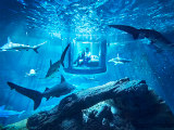 Airbnb's Latest Offering? A Shark Suite