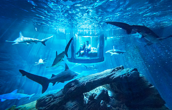 Airbnb's Latest Offering? A Shark Suite: Figure 1